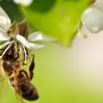 bumblebee.png.
